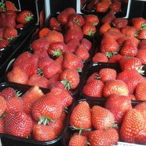 Aardbeien De Herenthoeve