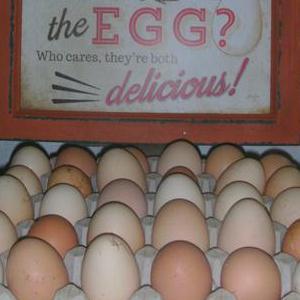 Hoeve-eieren vrije uitloop bij Hoeve Coppein Filip en Els