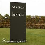 Laurica - Plants