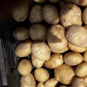 Aardappelen Moereveld