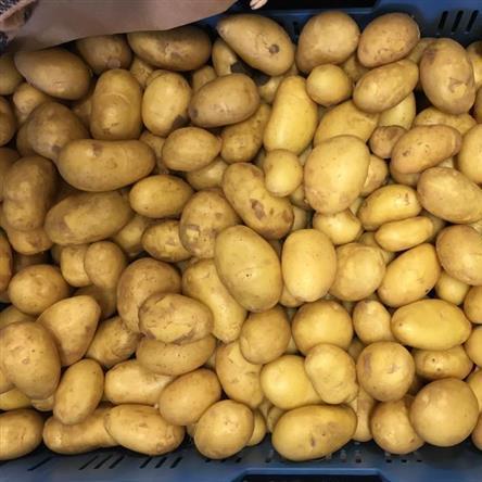Aardappelen 't Dunehof