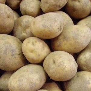 Aardappelen Hof ter Caleshoek