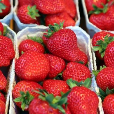 Aardbeien 't Kluizeken