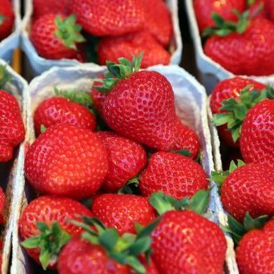 Aardbeien De Grenshoeve