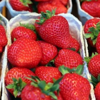 Aardbeien Rabarberhoeve het Warandehof