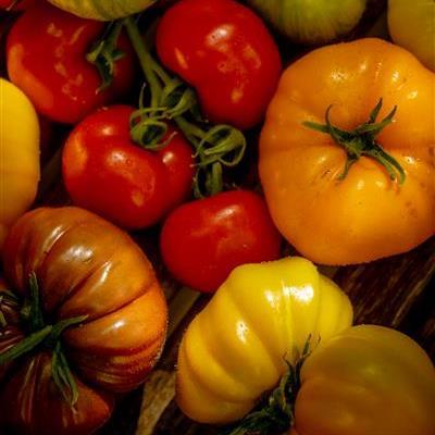 Seizoensgebonden groenten Biobedrijf Vermeulen
