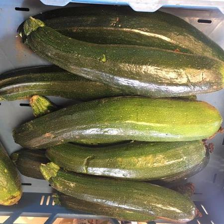 Courgettes 't Dunehof