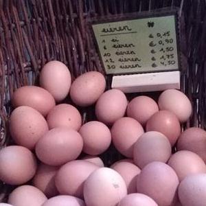 Verse eieren 't Fazantenhof
