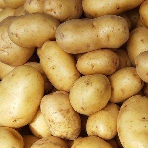 Aardappelen (nieuwe) Hoeve Vindevoghel